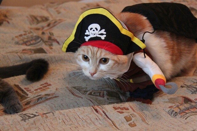 Funny Pet Cat Pirate Costume Suit Halloween Cat Dog Clothes Corsair Puppy Dressing up  Party Clothes for Cat plus Hat pajams 25